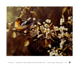 Blackburnian Warbler Print by Pierre Leduc