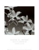 Orchid Denrobium Poster van Steven N. Meyers