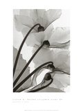 Cyclamen Study IV Prints by Steven N. Meyers