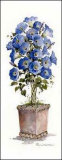 Morning Glory Topiary Prints by Carol Robinson