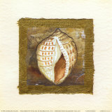 Conch Shell Posters by Charlene Winter Olson