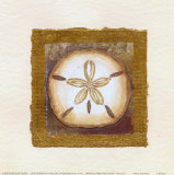 Sand Dollar Print by Charlene Winter Olson