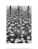 M. C. Escher - Tři světy Plakát