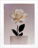 Rose Prints by Dick &amp; Diane Stefanich