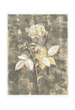 Silver Rose II Posters by Antonietta Vernice