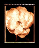 Beautiful Flower III Poster von Gerard Van Hal
