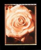 Schöne Blume II Poster von Gerard Van Hal