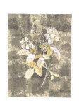 Silver Rose I Print by Antonietta Vernice
