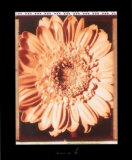 Beautiful Flower I Poster von Gerard Van Hal