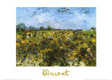 The Green Vineyard Posters by Vincent van Gogh