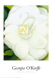 White Camelia Posters by Georgia O&#39;Keeffe