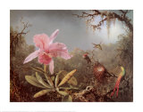 Cattleya Orchid and Three Brazilian Humm Art by Martin Johnson Heade