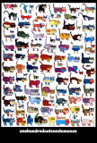 100 kotów i mysz (100 Cats and a Mouse) Reprodukcje autor Vittorio