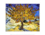 Árbol de Mulberry, ca. 1889 Láminas por Vincent van Gogh