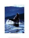 Humpback Whale Poster von Art Wolfe