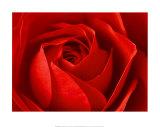 La Rose Posters