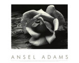 Rose and Driftwood Prints by Ansel Adams