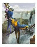 Iguazu Poster by Gabriela Ezcurra