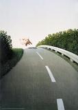 Autobahn-Schweinchen Kunstdrucke von Michael Sowa