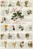 Herbs Prints