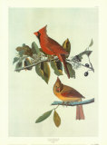 Serin cardinal Posters par John James Audubon