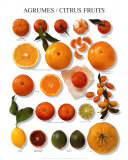 Citrus Fruit Print