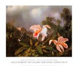 Dschungelorchideen und Kolibris Poster von Martin Johnson Heade