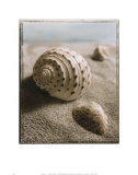Seashell I Prints by Sondra Wampler