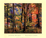 Maples and Birches Poster by Joseph Holmes