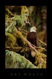 Centinela silencioso, Alaska Láminas por Art Wolfe
