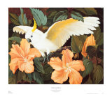 Cockatoo and Hibiscus Print by Jessie Arms Botke