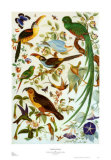 Audubon Fantasy Poster