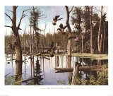 Summer Refuge, Wood Ducks Print by Anthony J. Rudisill