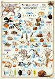 Mollusks Poster