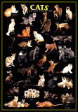 Cats Poster, International Edition