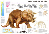 Dinosaurs Triceratops Posters