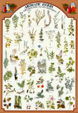 Duftende krydderurter, på engelsk og lation Plakater