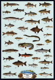 Fish Freshwater Posters
