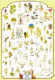 Hierbas y plantas medicinales Pósters