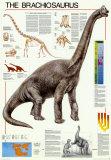 Dinosuars Brachiosaurus Poster