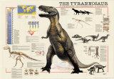 Dinosaurs Tyrannosaurus Prints