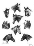 Young Quarters Limitierte Auflage von Sheri Greves-Neilson