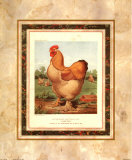 Buff. Cochin-Hahn Poster von  Cassell's Poultry Book