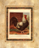 Hahn mit rotem Kamm Kunstdrucke von  Cassell's Poultry Book