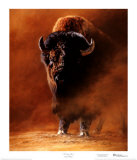 American Bison (LE) Limited Edition by Edward Aldrich