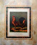 Golden Pencilled Hamburg-Hähne Kunst von  Cassell's Poultry Book