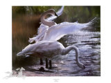 Trumpeter Swans (LE) Limited Edition by Anne Page