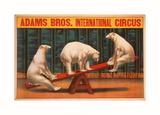 Adams Bros. International Circus - Poster