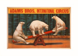 Adams Bros. International Circus Posters