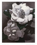 White Gardenias Posters by  Hornbuckle
